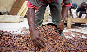 Cocoa worker in Côte d'Ivoire