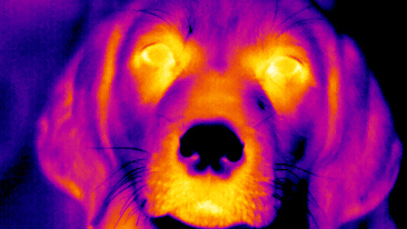 thermal image of a dog