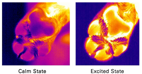 purina thermal imaging - image of a paw print